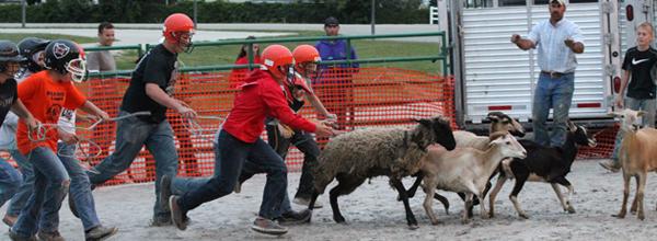 Livestock Scramble